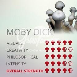 Kit de cultivo de setas Psilocybe Cubensis Moby Dick