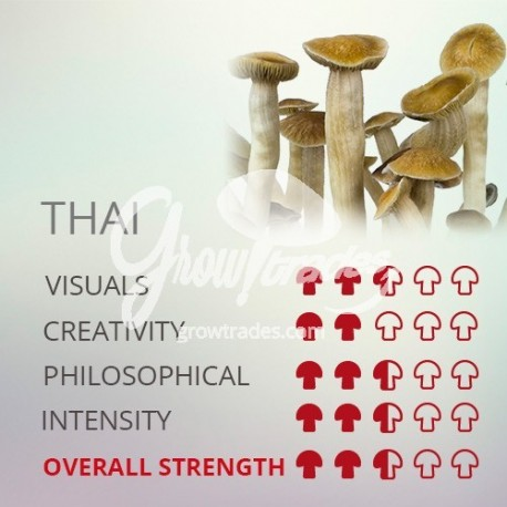 Grow Kit Thai, 100% Micelium