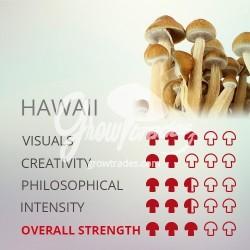 Kit de cultivo Psilocybe Cubensis Hawaii, 100% Micelio