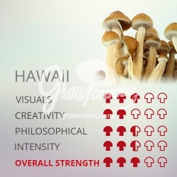 Magic Mushrooms Grow Kit Hawaii, Supra GrowKit 100% Mycelium