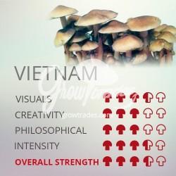 Kit de cultivo Psilocybe Cubensis Vietnam, 100% Micelio