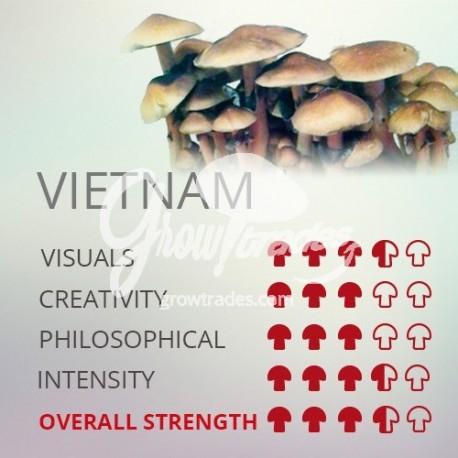 Grow Kit Vietnam, 100% Micelium