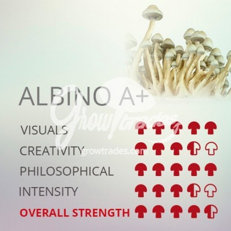 Magic Mushrooms Grow Kit Albino A+, SUPA Grow Kit 100% Micelium