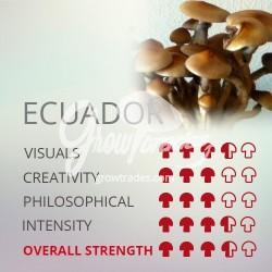 Kit de cultivo de setas Psilocybe Cubensis Ecuador, Supra GrowKit 100% Micelio