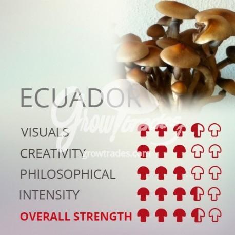 Magic Mushrooms Grow Kit Ecuador, Supra GrowKit 100% Micelium