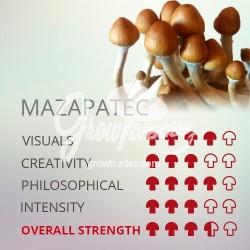 Kit de cultivo de setas Psilocybe Cubensis Mazapatec, Supra GrowKit 100% Micelio