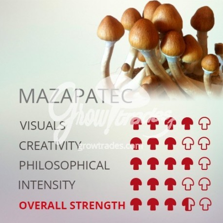 Magic Mushrooms Grow Kit Mazapatec, Supra GrowKit 100% Micelium