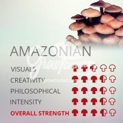 Kit de cultivo de setas Psilocybe Cubensis Amazonian, Supra GrowKit 100% Micelio