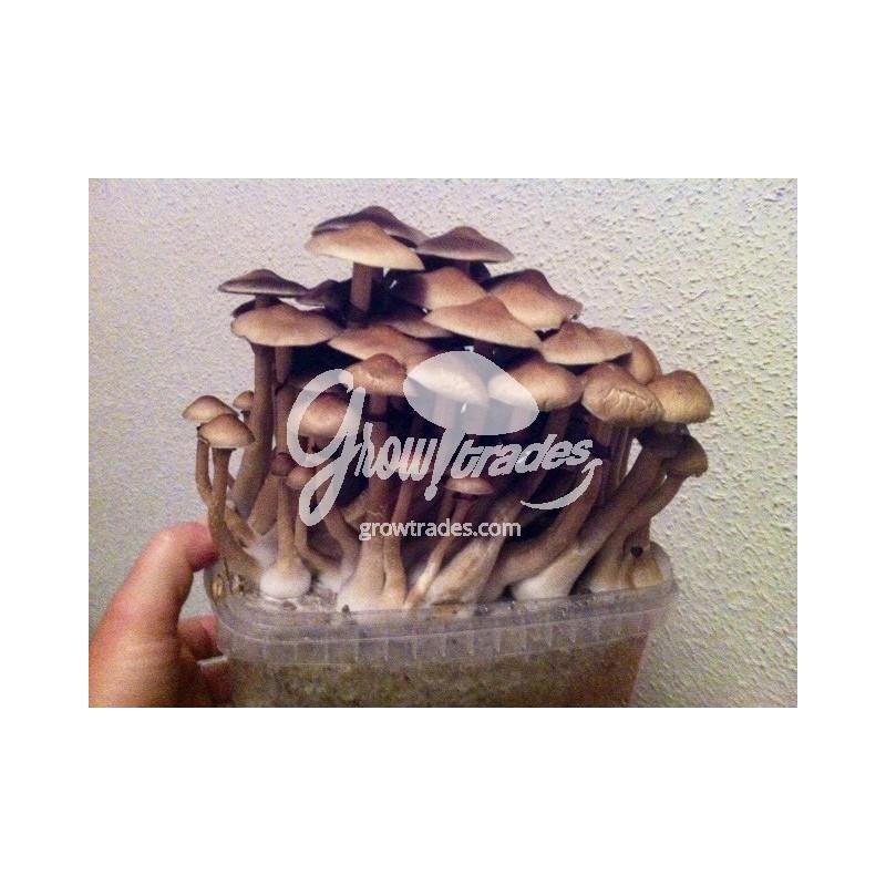 mushroom box growing instructions