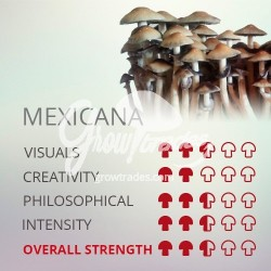 Magic Mushrooms Gro Kit Mexicana, Supra GrowKit 100% Micelium