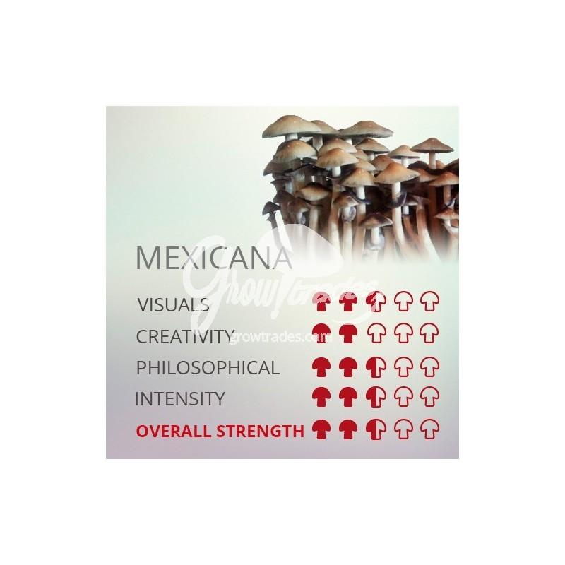 Magic Mushrooms Grow Kit Mexicana, Supra GrowKit 100% Mycelium