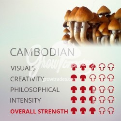 Kit de cultivo de setas Psilocybe Cubensis Cambodian, Supra GrowKit 100% Micelio
