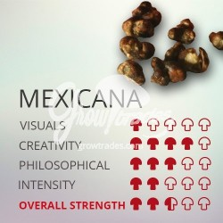 Magic Truffle Grow Kit Mexicana