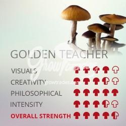 Kit de cultivo de setas Psilocybe Cubensis Golden Teacher, Supra GrowKit 100% Micelio