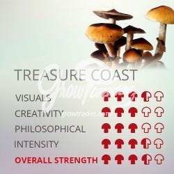 Kit de cultivo de setas Psilocybe Cubensis Treasure Coast, Supra GrowKit 100% Micelio