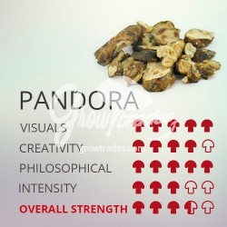Magic Truffle Psilocybe Pandora