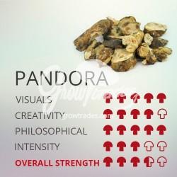 Trufas mágicas psilocybe Pandora