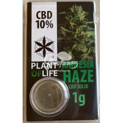 Amnesia CBD Solid 3,8% (Plant of Life)