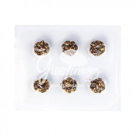Magic truffles microdosis pack
