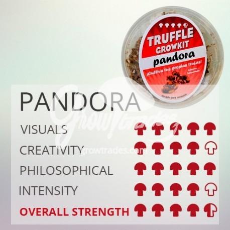 Magic Truffle Grow Kit Pandora