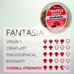 Magic Truffle Grow Kit Fantasia