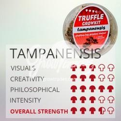 Magic Truffle Grow Kit Tampanensis