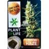 Lemon Haze CBD Solid 3,8%(Plant of Life)