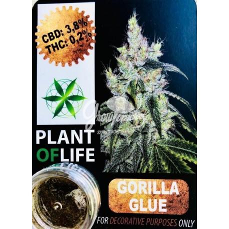 Chocoloco CBD Solid 10% (Plant of Life)