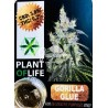 Gorila Glue CBD Solid 3,8% (Plant of Life)