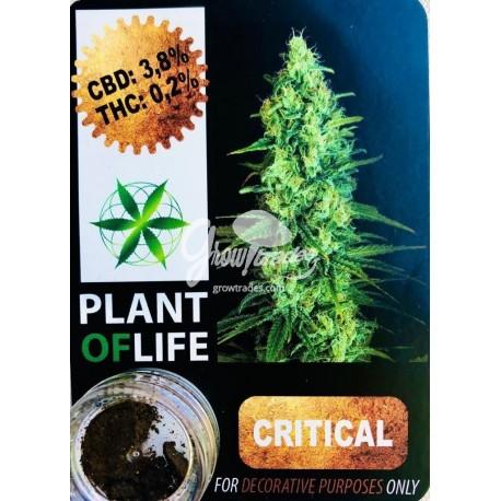 OG Kush CBD Solid 10% (Plant of Life)