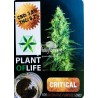 INCIENSO CBD Sólido Critical 3,8% (Plant of Life)