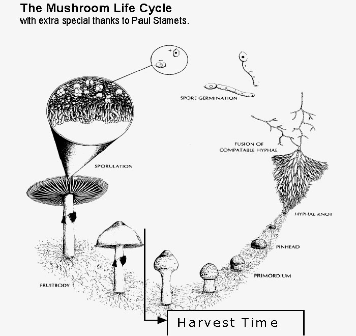 magic mushrooms grow kits instructions